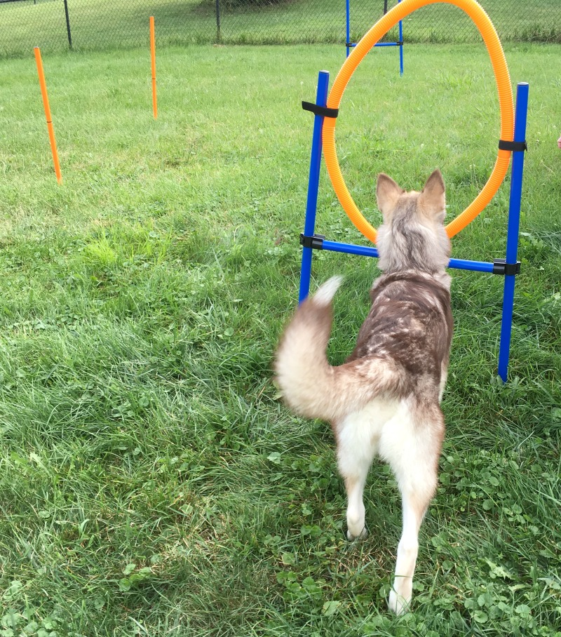 Looking for a great starter set to start training your dog in agility? See what we think of the Namsan Dog Agility Training Equipment Set here!