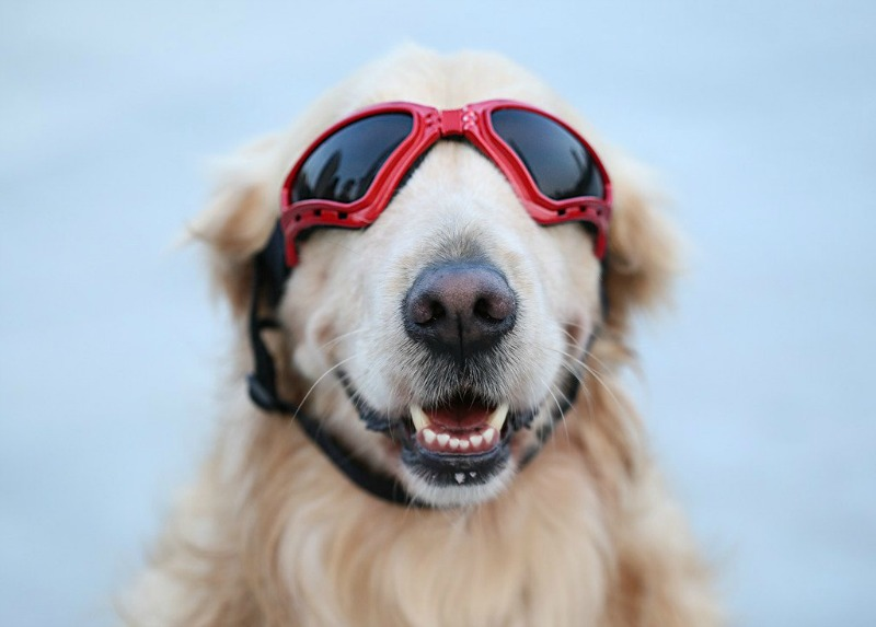 PETLESO Large Dog Goggles 1