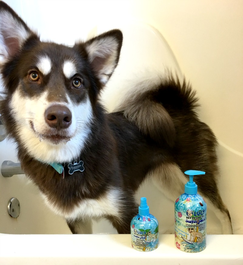 Want to keep your pets clean & help prevent the overpopulation of cats & dogs? See why we love Lucy Pet Products here!