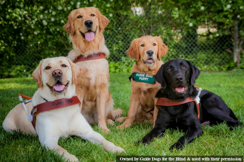 Guide Dog Group