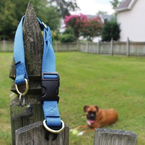 Does your dog wear a collar daily? See why is important that you know about dog collar safety here!