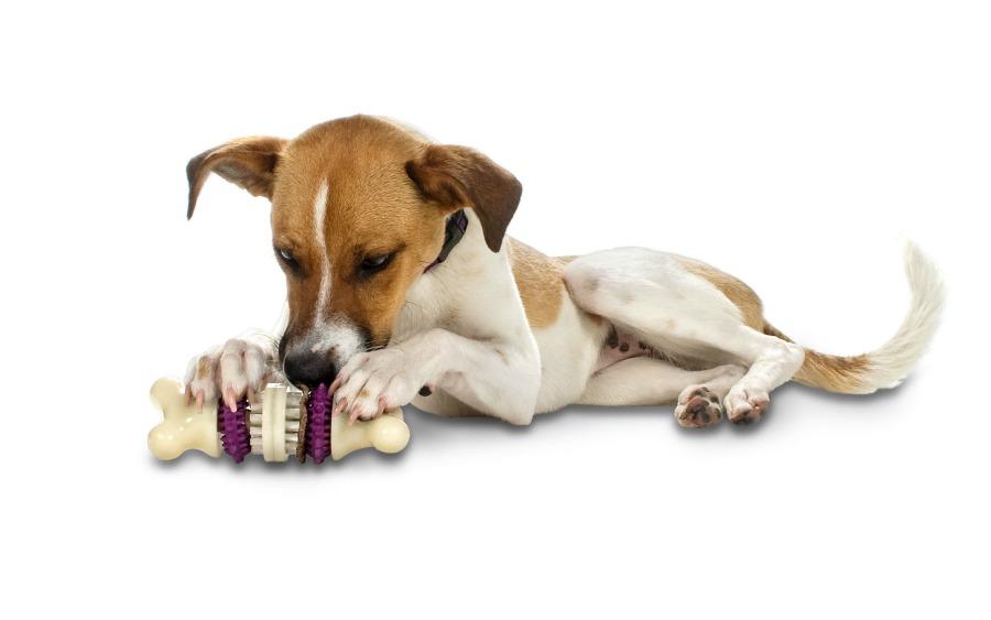 petsafe-busy-buddy-bristle-bone