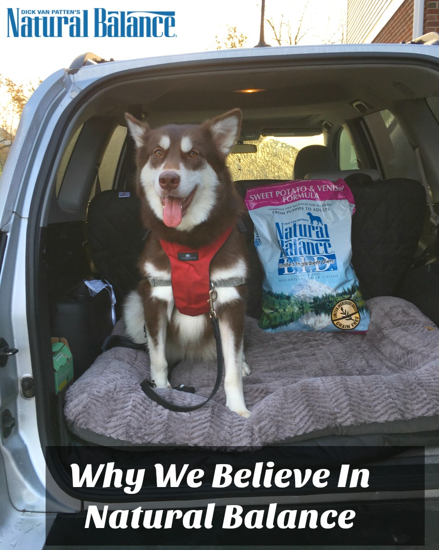 Looking for a quality food for your dogs? See why we believe in Natural Balance & how their LID formula helped with Ivi's allergies here!