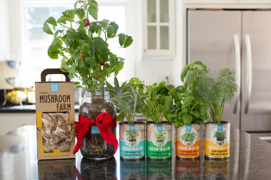 Are you considering having your own garden indoors? See why we are fans of Back to the Roots organic garden sets here!