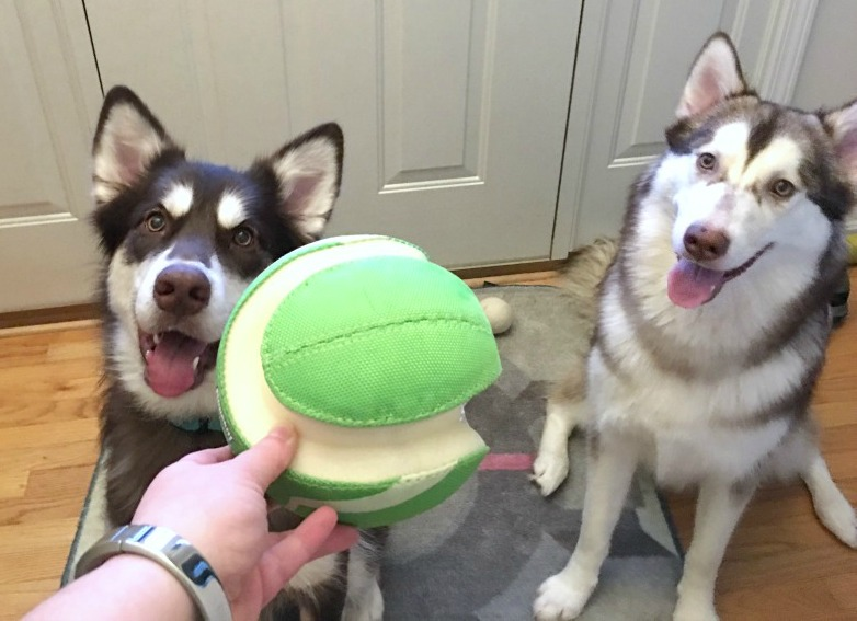 Do you let your dog play with tennis balls & other balls at home? Learn what you need to do at home to protect your dog(s) from one of their favorites toys here!