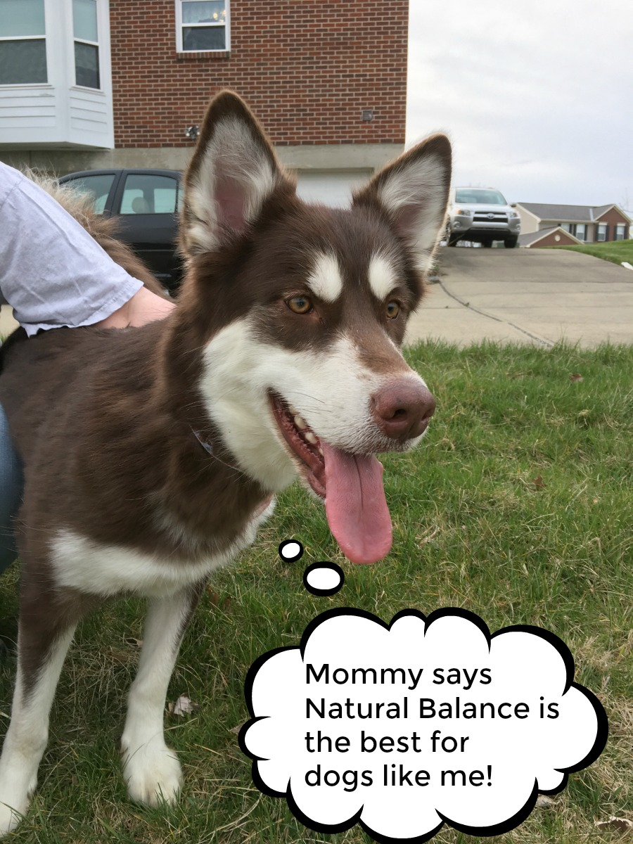 Do you know the ingredients in your dogs food & how it was tested? See why our family believes in Natural Balance dog food for every meal here! #WeBelieveinNB