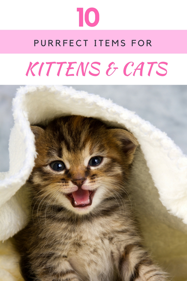 Looking for some cute items to spoil your favorite cats? Check out these 10 Purrfect Items for Cats & Kittens here!