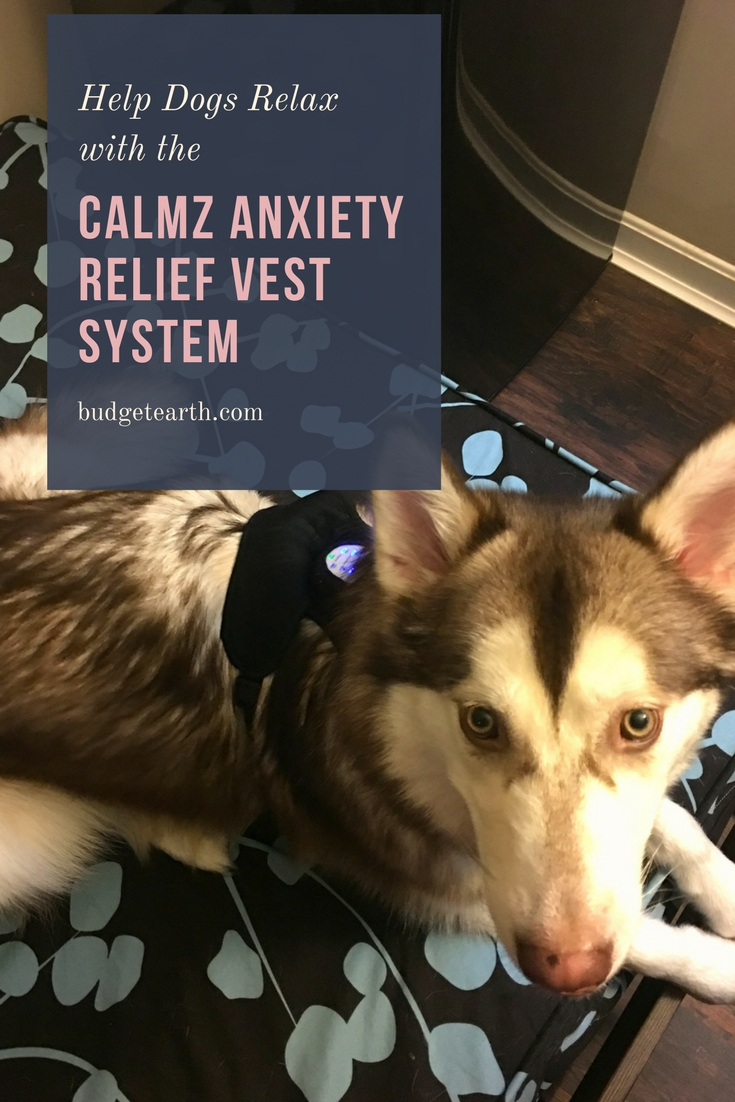 Looking for ways to help your dog relax & better handle fireworks or separation anxiety? See what we think of the Calmz Anxiety Relief Vest System here!