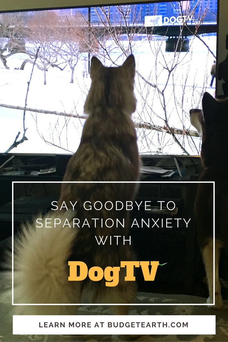 Do you have a dog with separation anxiety or just need some relaxation? See why we are huge fans of the new channel just for dogs - DOGTV - here!