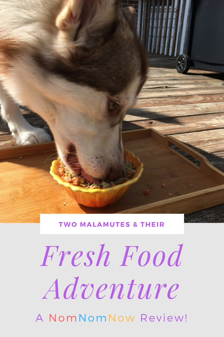 Considering starting your dog on a fresh dog food diet but not sure where to start? See what we think of feeding NomNomNow for 1 month with our girls here!