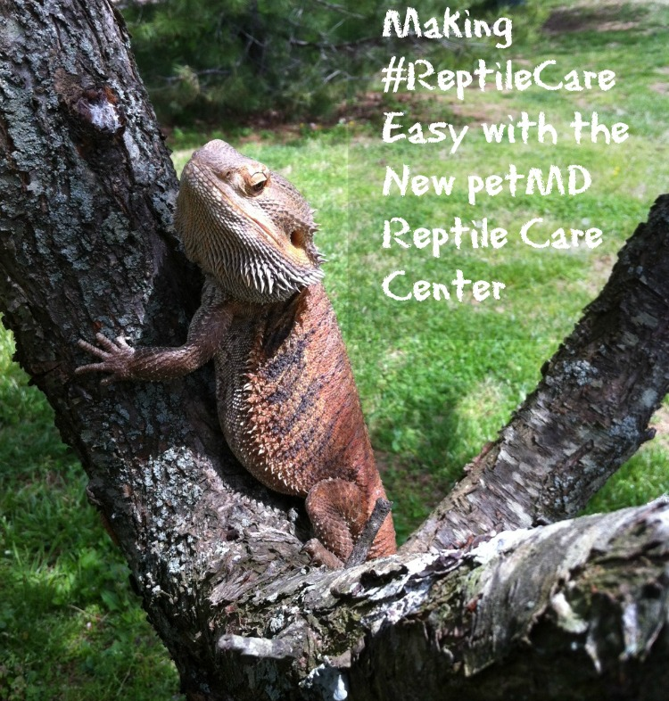 Making #ReptileCare Easy with the new petMD Reptile Care Center