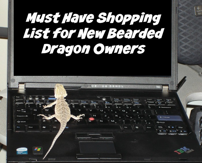 Must Have Shopping List for New Bearded Dragon Owners #ReptileCare