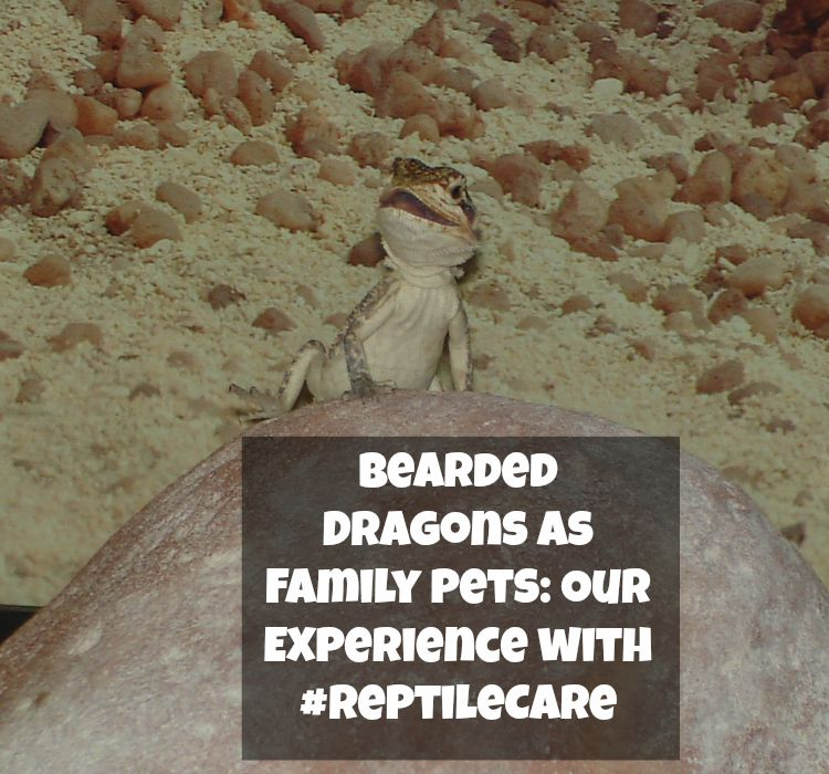 Considering adding a bearded dragon or other reptile to your family? See our own experience with reptile care & reptile ownership here!