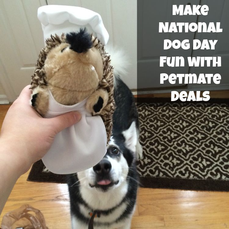 Want to spoil your favorite dog or newly adopted dog for National Dog Day? Learn how you can get 50% off on Petmate toys here!