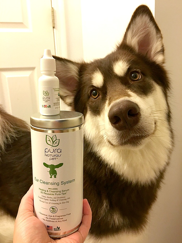 Enjoy Clean Puppy Ears with Pura-Tip Ear Cleansing System