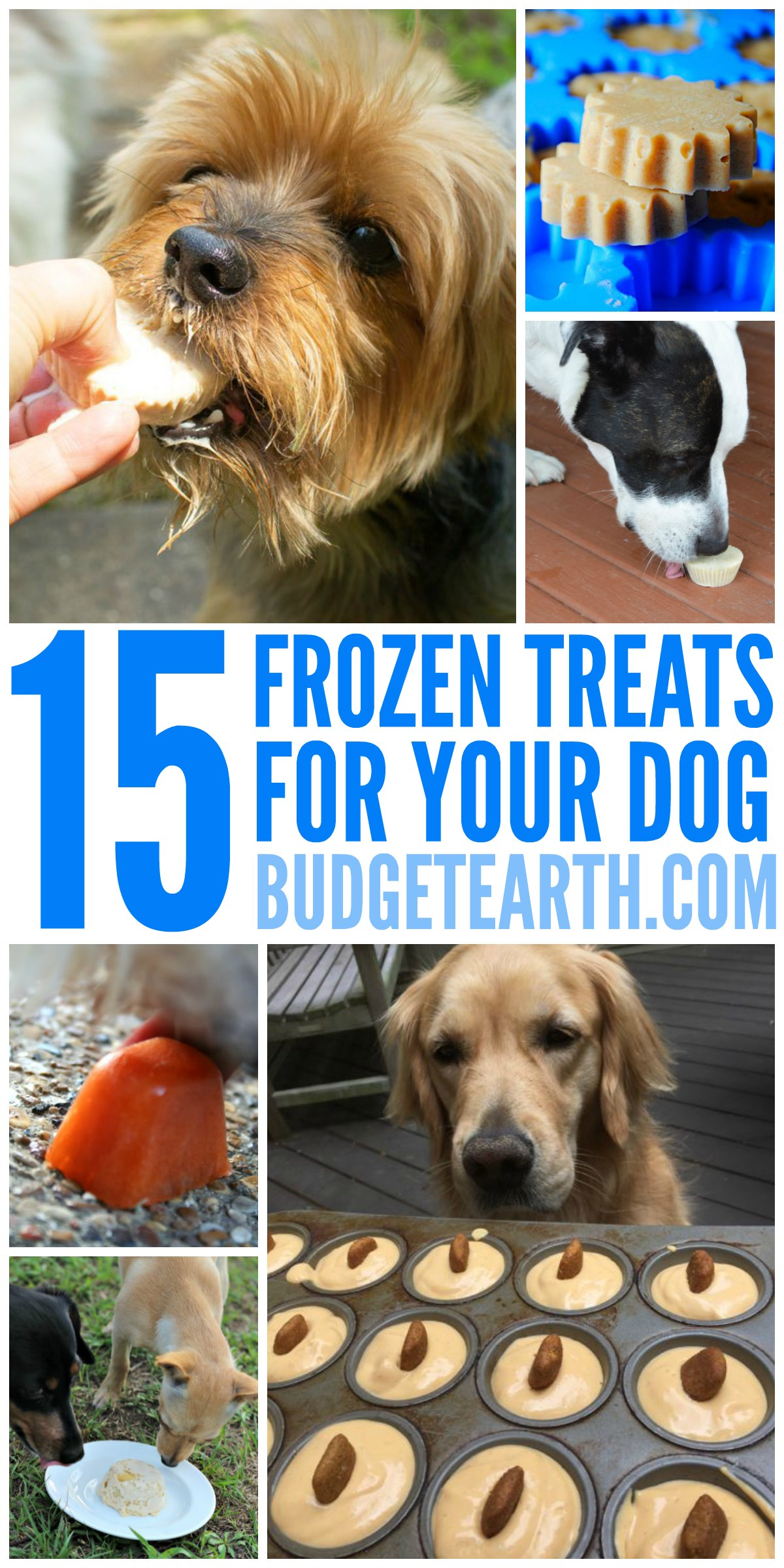 Looking for some delicious summer treats for your dog? Check out these 15 Frozen Treat Recipes for dogs here!