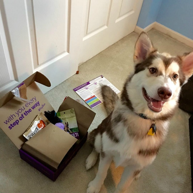 Looking for some wonderful toys for your growing puppy? See what we think of the 5 month Pupbox here!