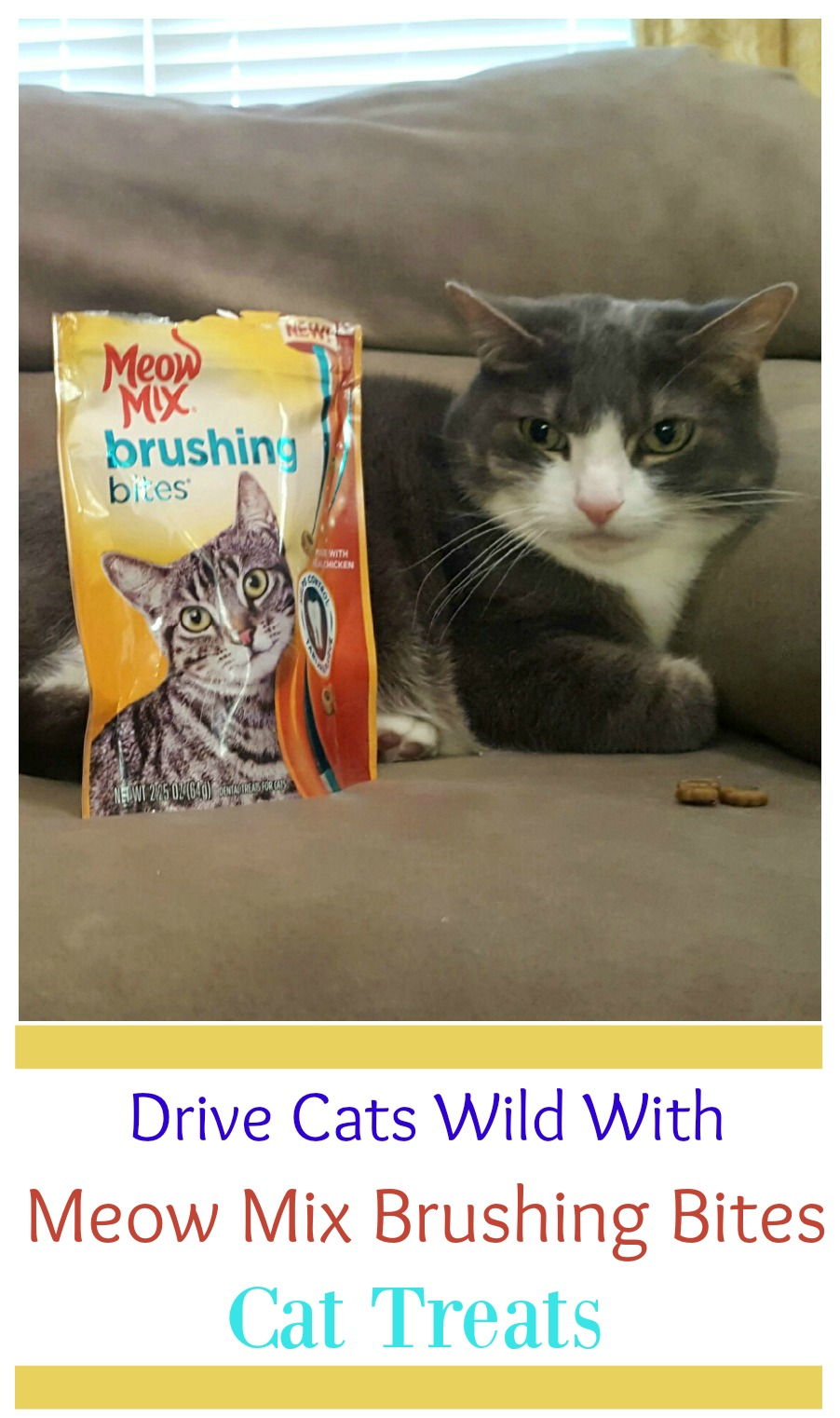 Drive Cats Wild with Meow Mix Brushing Bites Cat Treats