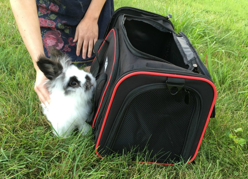 Bunny Travel Made Easy with the OKBUYNOW Soft Pet Carrier