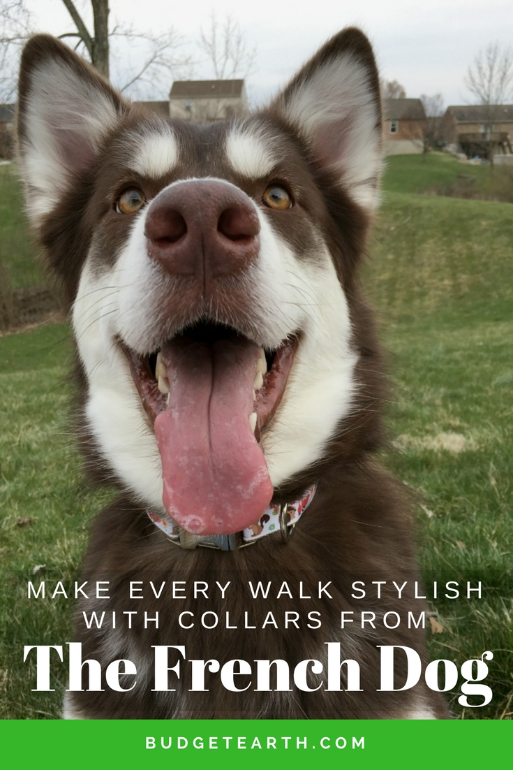Make Every Walk Stylish with Collars from The French Dog