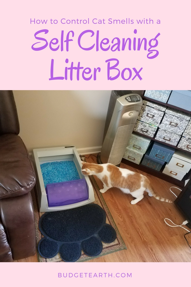 How to Control Cat Smells with a Self Cleaning Litter Box