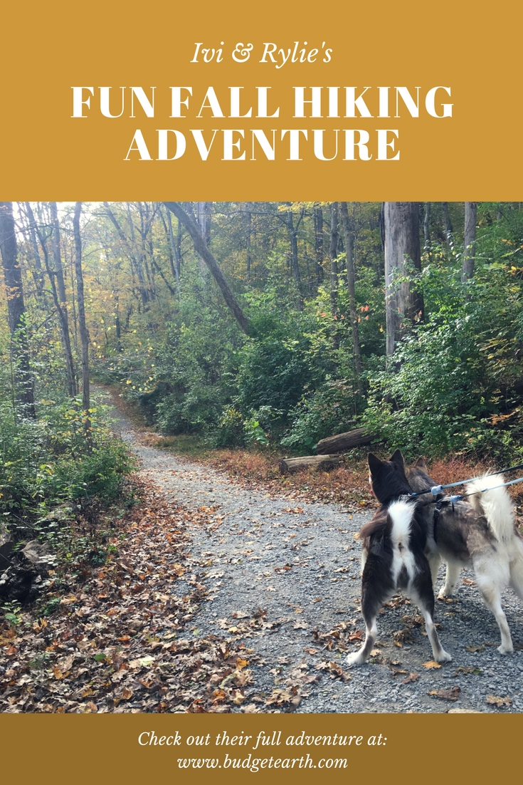 Do you believe that life is a journey & love going on adventures with your dog? Check out Ivi & Rylie's fun adventure at a local nature reserve here!