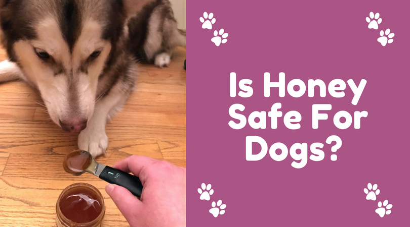 Is Honey Safe For Dogs?