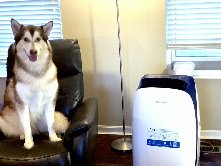 red & white Alaskan malamute sitting on black leather chair next to Honeywell Portable Air Conditioner