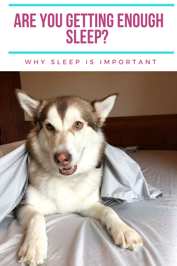 PeachSkinSheets Alaskan Malamute sleep tips