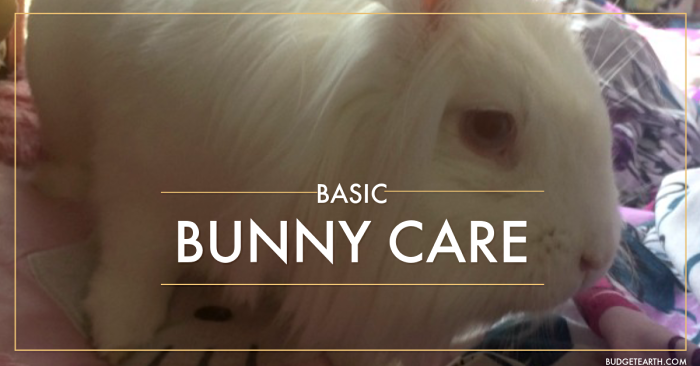 Thinking of letting a rabbit burrow its way into your family? Get the scoop on basic bunny care here!