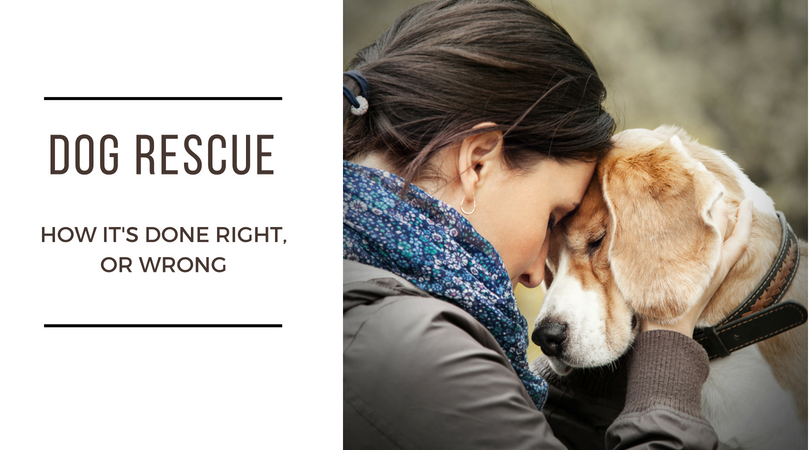 Dog Rescue – How It's Done Right, Or Wrong