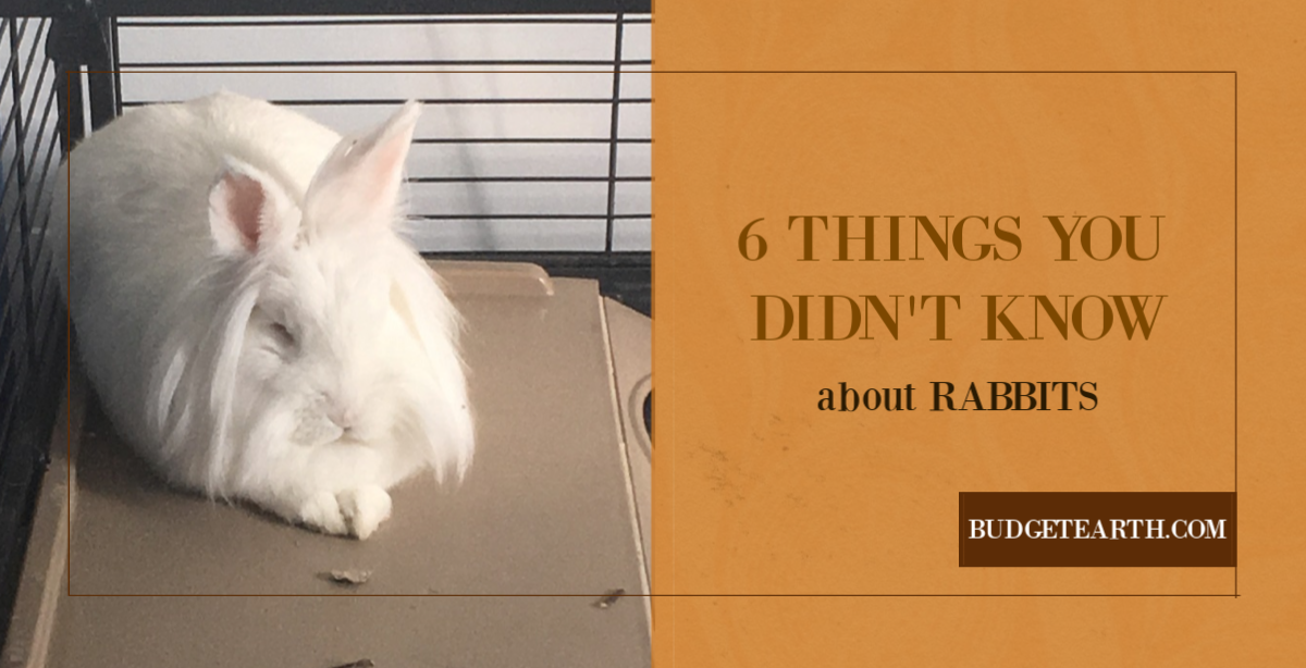 Rabbits are the third most popular pet in America, but most people actually have very little understanding of them. Test your knowledge with these 6 Things You Didn't Know About Rabbits!