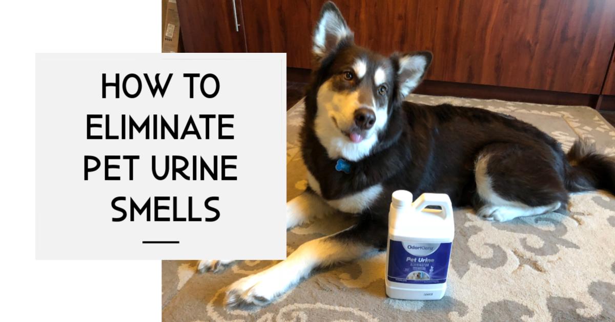 How to Eliminate Pet Urine Smells